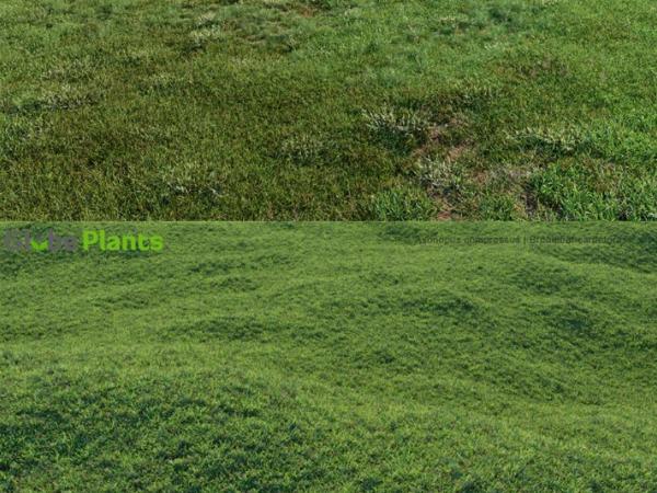 171个草地草坪3D模型下载 Globe Plants Bundle 13 – Grass & Lawn