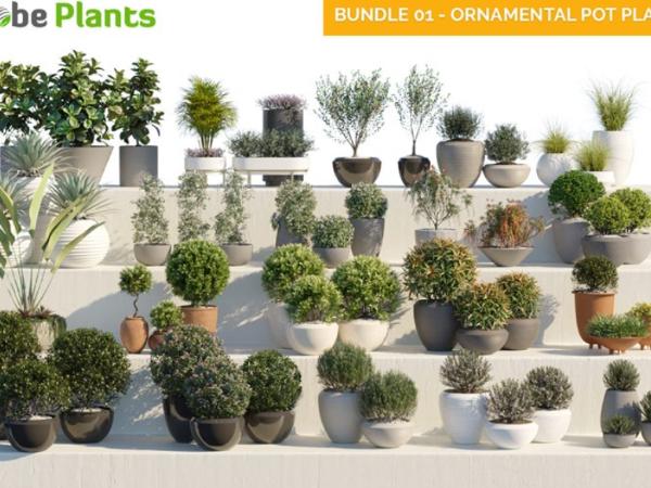 58种 观赏性和装饰性的盆栽植物3d模型下载 Globe Plants – Bundle 01 Ornamental Pot Plants