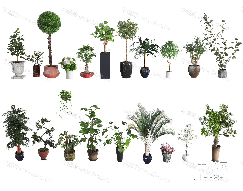 吊兰 铁树 球球 植物 花盆 花卉 绿植 装饰 花园