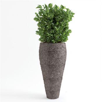 办公酒店植物