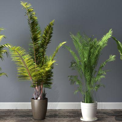 植物,盆栽,盆景