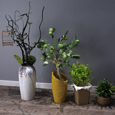 植物,盆景,盆栽