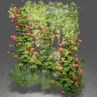 植物,绿植墙,藤蔓