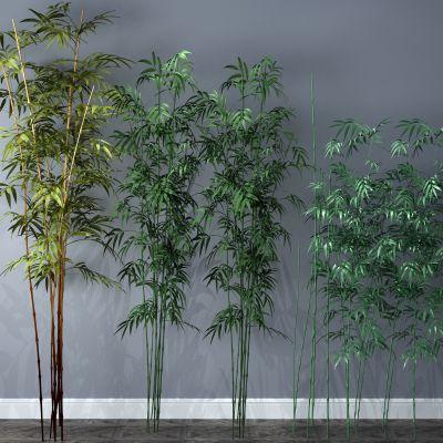 植物,竹子,竹