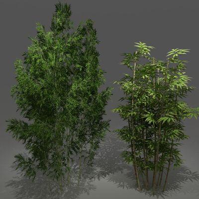 植物,竹,竹子