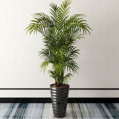 新中式植物盆栽3D模型