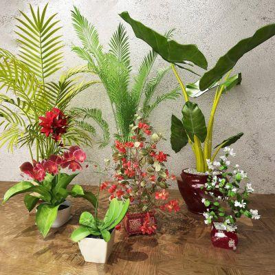 现代绿色植物盆栽组合