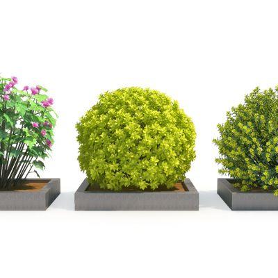 室外绿植球2灌木