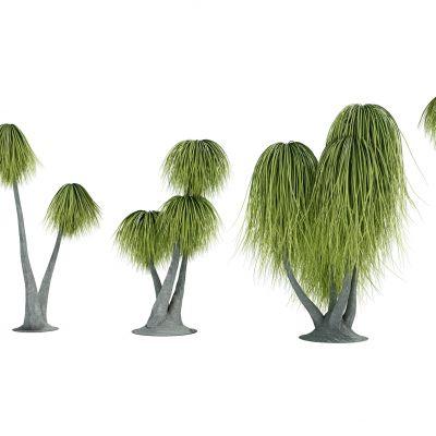 热带植物树