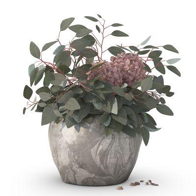 现代植物花卉盆栽