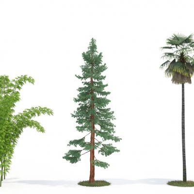 室外绿植椰子树(vr代理)