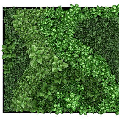 绿化墙植物墙