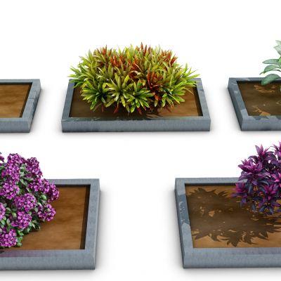 室外矮植物花(vr代理)