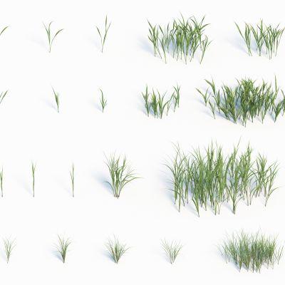 灌木花草,草堆,花朵,草地,草丛,杂草